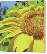 Sun Flower Art Sunlit Sunflower Giclee Prints Baslee Troutman Wood Print