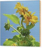 Sun Flower Artwork Sunflower 5 Giclee Art Prints Baslee Troutman Wood Print