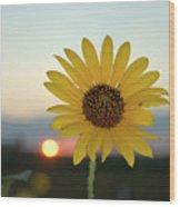 Sun Flower At Sunset Wood Print