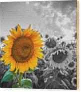 Sun Flower B And W Wood Print