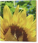 Sun Flower Floral Art Prints Sunflowers Summer Garden Wood Print