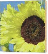 Sun Flower Garden Art Prints Sunflowers Baslee Troutman Wood Print