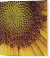 Sun Flower Wood Print