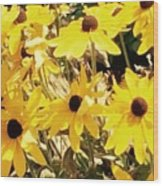 Sun Flower Glory Wood Print
