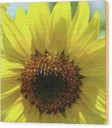Sun Flower Glow Art Print Summer Sunflowers Baslee Troutman Wood Print