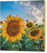 Sun Flower Glow Wood Print
