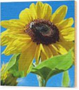 Sun Flower - Id 16235-142741-1520 Wood Print