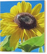 Sun Flower - Id 16235-142743-3974 Wood Print