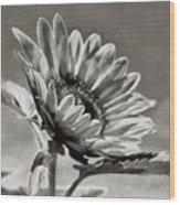 Sun Flower - Id 16235-142753-8673 Wood Print
