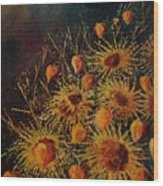 Sun Flowers And Physialis  Wood Print