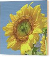 Sun Flowers Garden Art Prints Baslee Troutman Wood Print