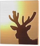 Sun Glaring Over A Bull Elk Wood Print