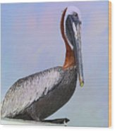 Sun Glow Pelican Wood Print