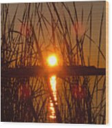 Sun In Reeds Wood Print