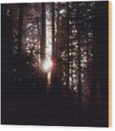 Sun In The Forest  Wood Print