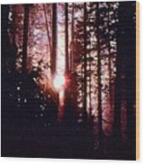 Sun In The Forest Two  Wood Print