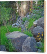 Sun In The Sequoias Wood Print