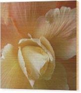 Sun Kissed Begonia Flower Wood Print