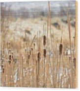 Sun Kissed Cattails - Casper Wyoming Wood Print
