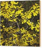 Sun-kissed Golden Leaves 2 Wood Print