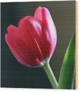 Sun Kissed Tulip I Wood Print