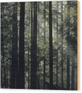 Sun Light Wood Print