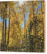 Sun Peaking Through The Aspens  Wood Print