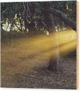 Sun Rays 2 Wood Print
