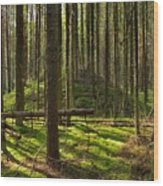 Sun Rays In Forest Wood Print