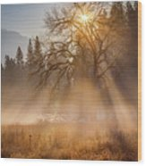 Sun Rays In Yosemite Ground Fog Wood Print