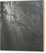 Sun Rays Through The Trees On A Foggy Winter Day Wood Print
