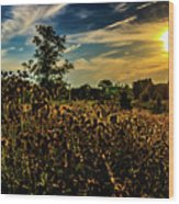 Sun Setting At Valley Forge Wood Print