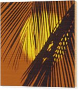 Sun Shining Through Palms Wood Print