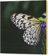 Sun Shining Through The Wings Of A Rice Paper Butterfly Wood Print