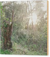 Sun Shining Through Trees In A Mysterious Forest Wood Print