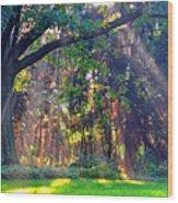 Sun Shower C Wood Print