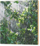 Sun Shower Photograph Wood Print