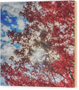 Sun Sky Clouds And A Red Maple Wood Print