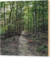 Sun Streaked Path  Wood Print