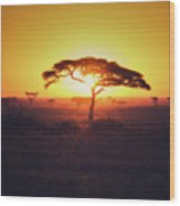 Sun Through Acacia Wood Print