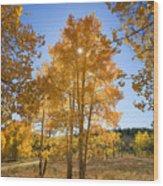Sun Through Aspens Wood Print by Ron Dahlquist - Printscapes