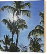 Sun Through Smathers Beach Palms Wood Print
