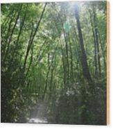 Sun Through The Trees Wood Print