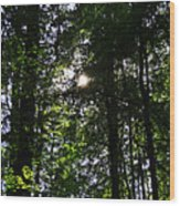 Sun Through Trees In Forest Wood Print