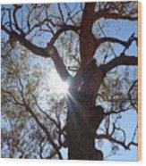 Sun Tree Wood Print