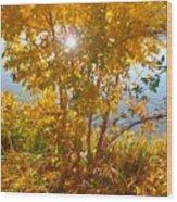 Sun Warmth Wood Print