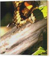 Sunbathing Butterfly Wood Print