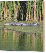 Sunbathing Gator Wood Print