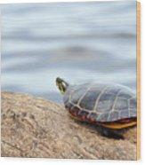 Sunbathing Turtle Wood Print
