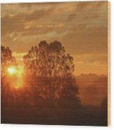 Sunbeam Through Cottonwoods Wood Print